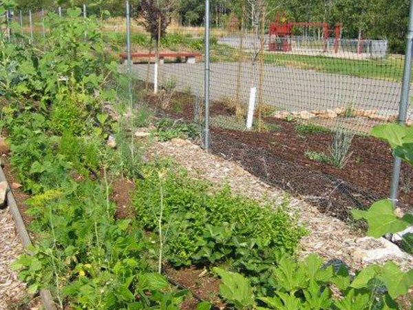 Community-Garden-Summer-2012