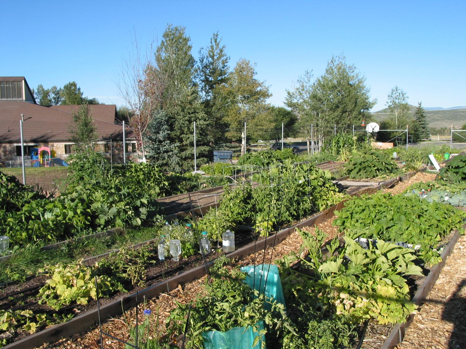 Garden-Harvest.jpg