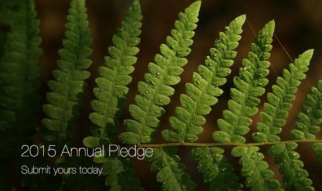 2015-pledge