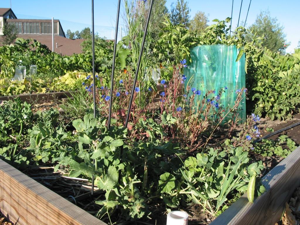 community-gardens